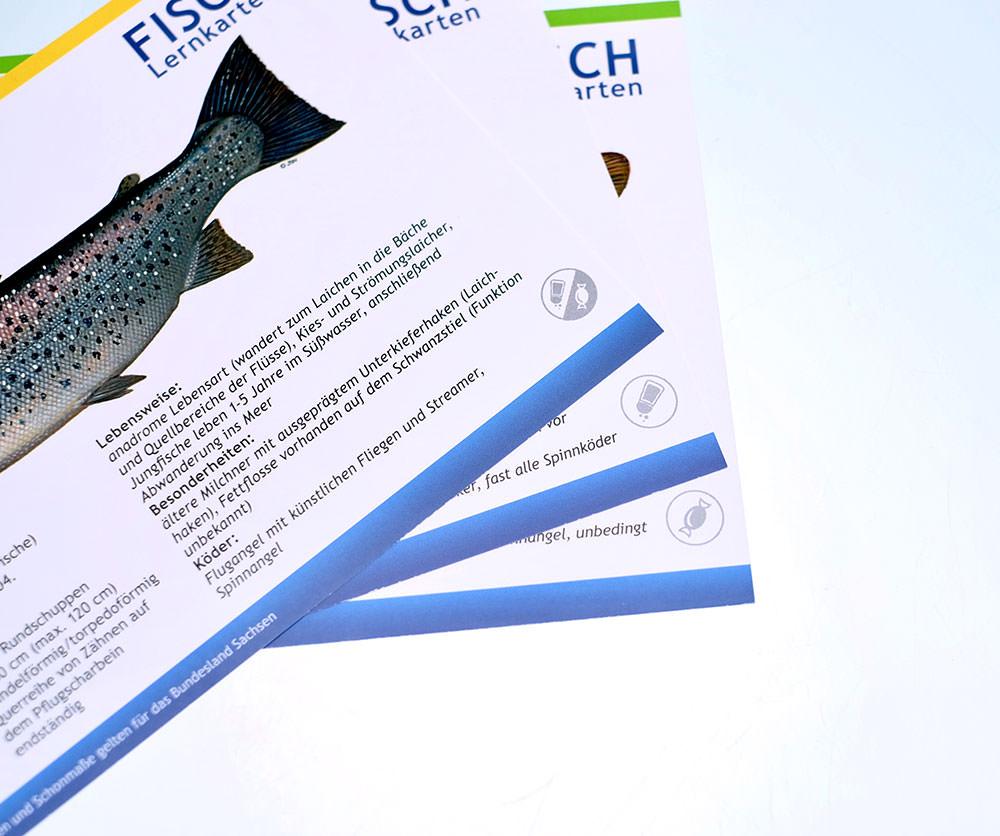 FISCH-Lernkarten-Angelschein-Fischereischein-Dresden-Sachsen